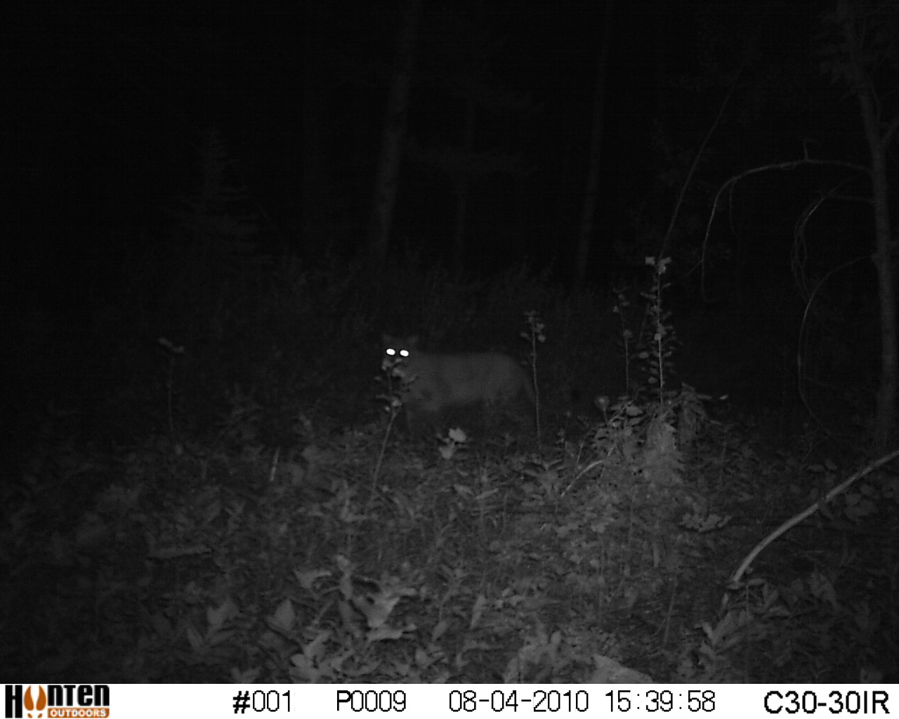 Bear eyes at night - photo#1